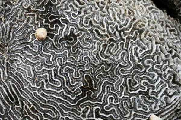 andrea-pineros-bijou-contemporain-vegetal-lichen-nature